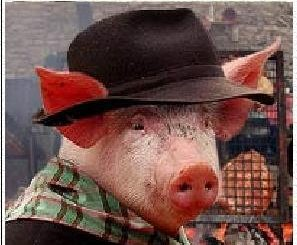 cochon-resistant.jpg