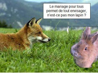 Le mariage du renard et du lapin