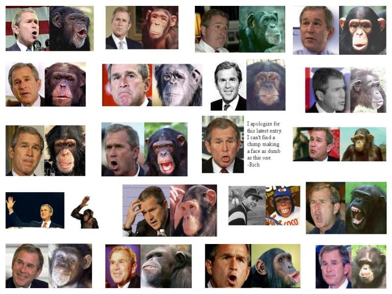 Bush chimpanzees