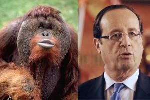 Hollande orang-outang (Pascal Picq)