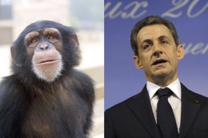 Sarkozy chimpanze (Pascal Picq)