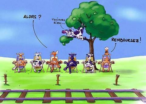 vaches_train