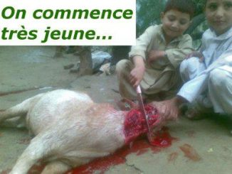 Islam - On commence tres jeune a egorger