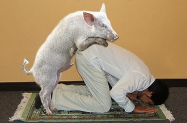 Pig fucks Muslim 2