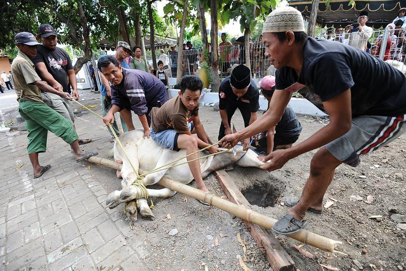 BESTPIX  Indonesian Muslims Celebrate Eid Al-Adha