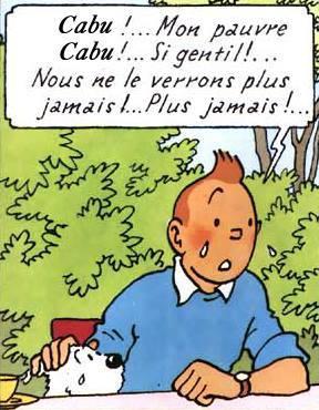 Même le célèbre reporter Tintin n'y retrouve plus son .... latin !