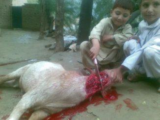 Egorgement-par-enfants-musulmans