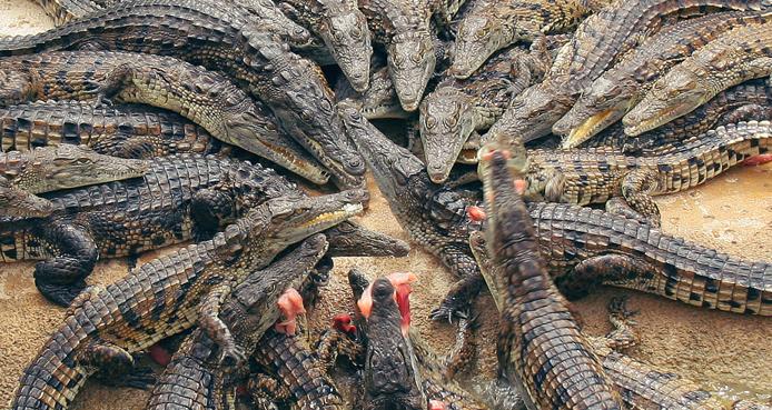 """Résultat de recherche d'images pour """"marigot crocodiles"""""""