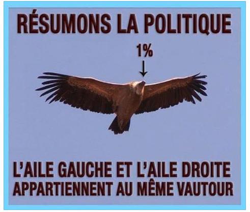 aile-droite-aile-gauche-meme-vautour