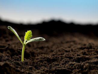 terre-pousse-germe-fleur-espoir.jpg