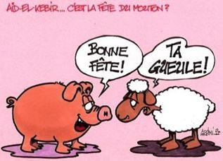 200 000 moutons égorgés, 251 migrants sauvés !