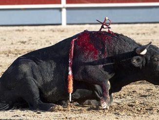 Lhypocrisie-de-la-defense-animale.jpg