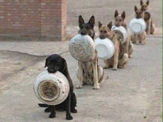 chiens2Bgamelle.jpg