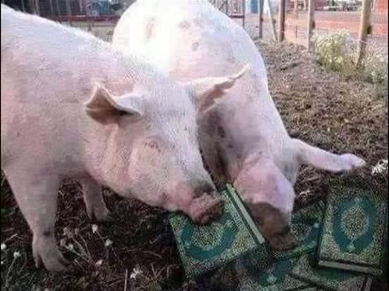 Dans le cochon tout est bon, dans le Macron, rien n'est bon !