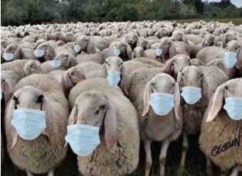 News au 4 juillet 2020 Moutonsmasques