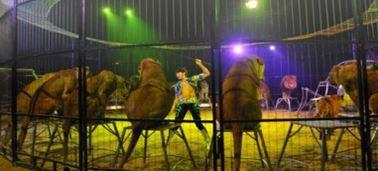Interdiction des animaux sauvages dans les cirques : hourra, on a gagné !