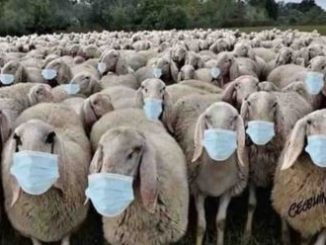 Moutonsmasques.jpg