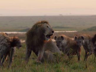 Lionencercle.jpg