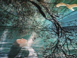 Créatif, Nature, Femme, Mouette, Fantasy