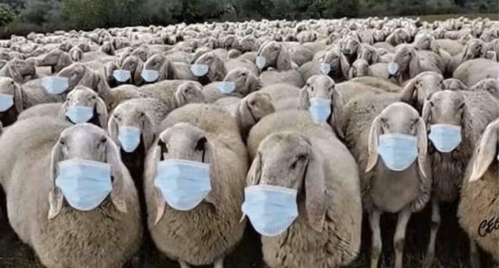 Ma soirée chez mes amis les moutons de la France profonde