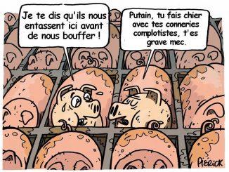 Cochons-complotistes.jpg