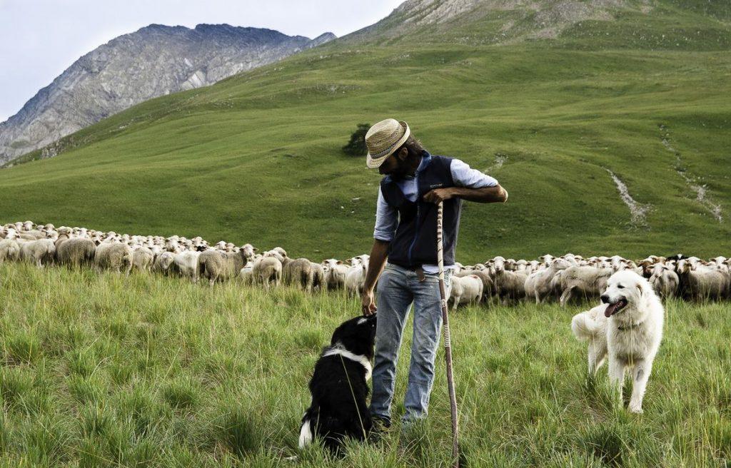 """Haute-Savoie : """"les bronzés"""" nouvelle version tabassent un berger"""
